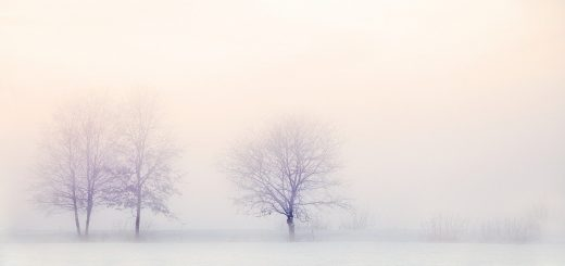 winter landscape, trees, snow